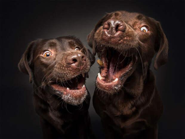 Мало кто из собак оказался неравнодушен к пролетающим мимо лакомствам.