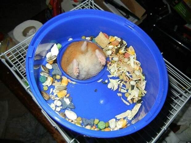 Плотный обед животные, застряли, любопытные, смешные, фото