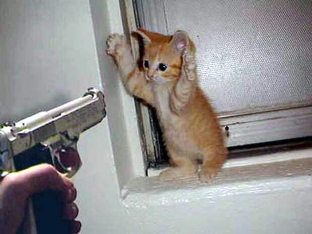 Это же котик! не мой день, неудача, фото, что то пошло не так, юмор