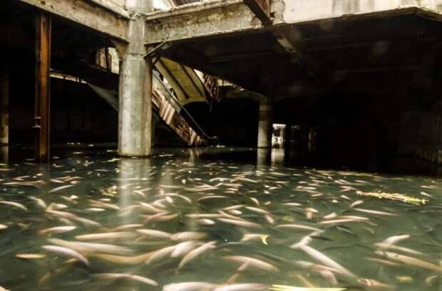 """Тайна заброшенного и """"захваченного"""" рыбой торгового центра в мире, рыба, тайна, торговый центр, удивительно"""