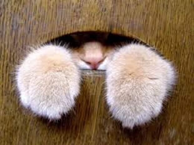 ВВитебске кошка заперла хозяйку набалконе. Женщина размахивала белой тряпкой извала прохожих
