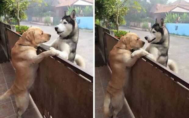Эти собаки – лучшие друзья