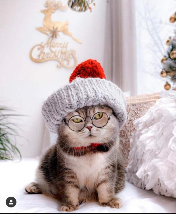 «Этот котик в вязаных вещах украл моё сердечко. И ваше тоже украдёт»: вязаные идеи для домашних питомцев и много фото