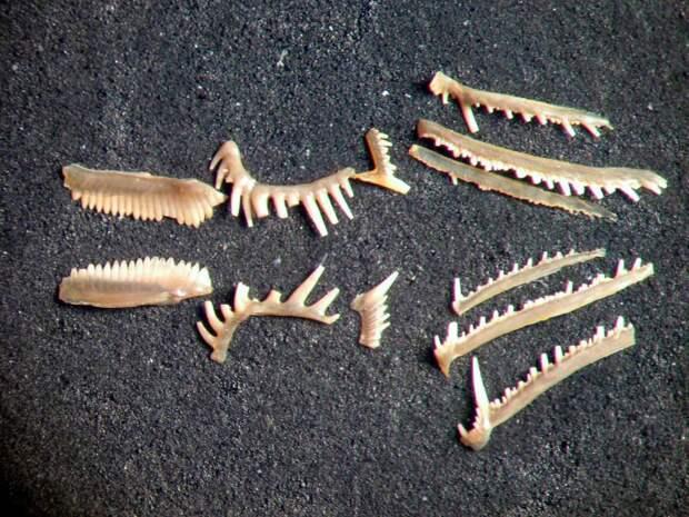 Как древние хищники самостоятельно «лечили» зубы