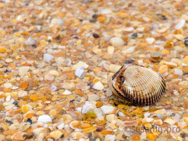 К купальному сезону в Удмуртии откроют 56 пляжей
