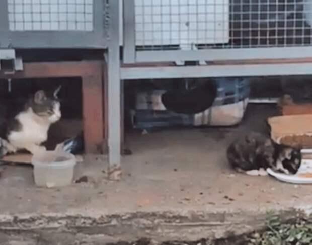 Умоляем вас о помощи! Замерзают котята на улице.
