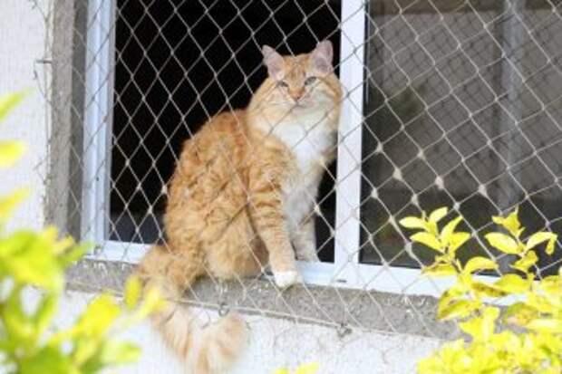 кошки могут скучать по хозяевам