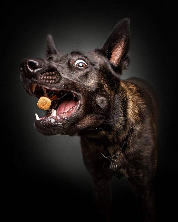 ФОТОВЫСТАВКА. Christian Vieler: забавные собаки