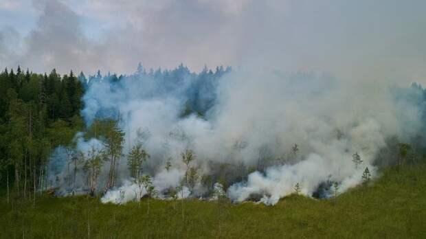В Карелии отменили введённый из-за пожаров режим ЧС