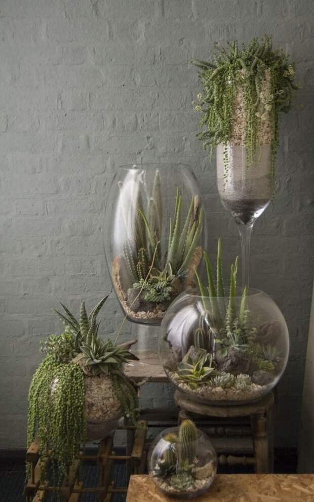 Или чуть больше зеленый, лестницы, полки, растения, этажерки