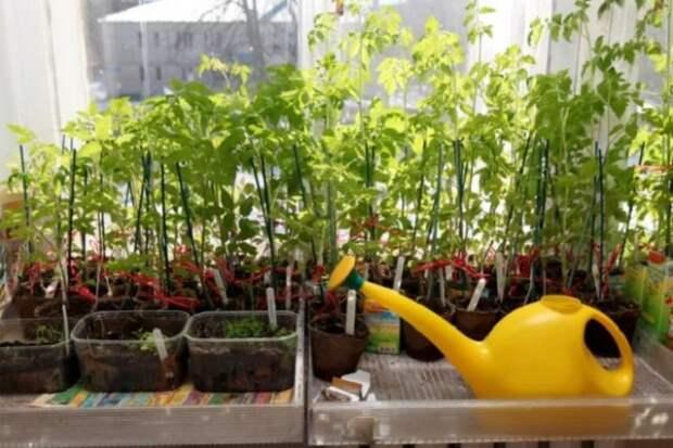 Как повысить иммунитет растений