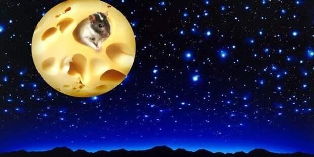 Луна из сыра