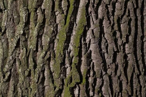 Коммунальщики закрасили поврежденные деревья на Верхней Масловке