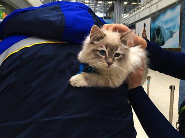 Спасти любой ценой - Кошка выбралась из переноски в аэропорту и позвала на помощь