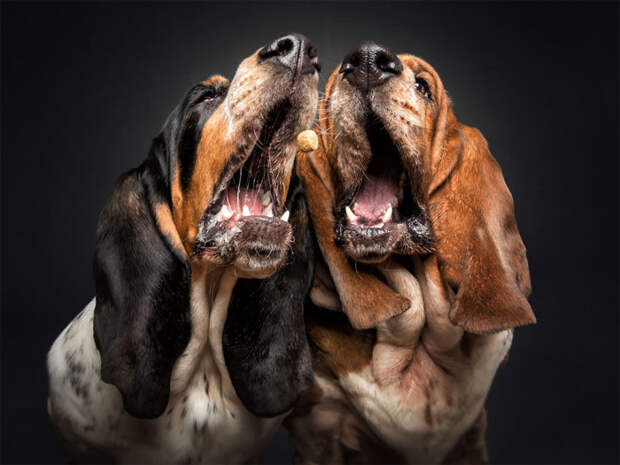 С помощью фотопроекта «Собаки ловят угощения» Кристиан Вилер показывает индивидуальность каждой собаки.