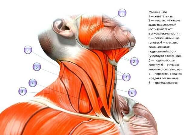 Упражнения, которые разгладят морщины на шее и увеличат угол поворота головы