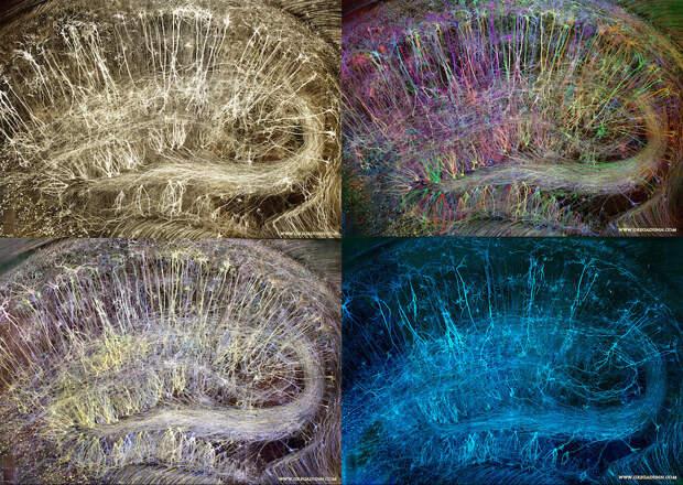 Brainbow-Hippocampus-compilation