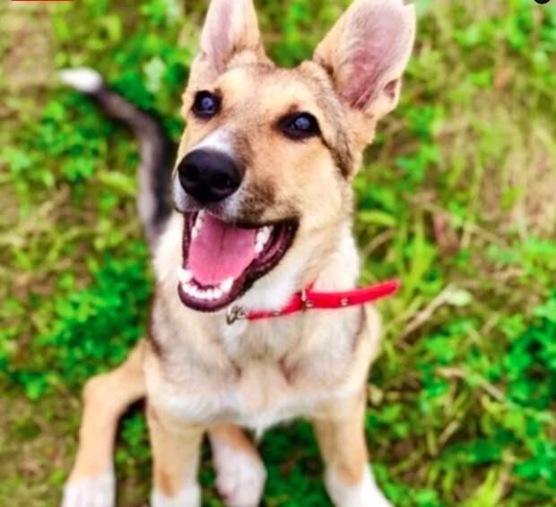 Волонтеры спасли от смерти собаку, и сейчас она – настоящая красавица