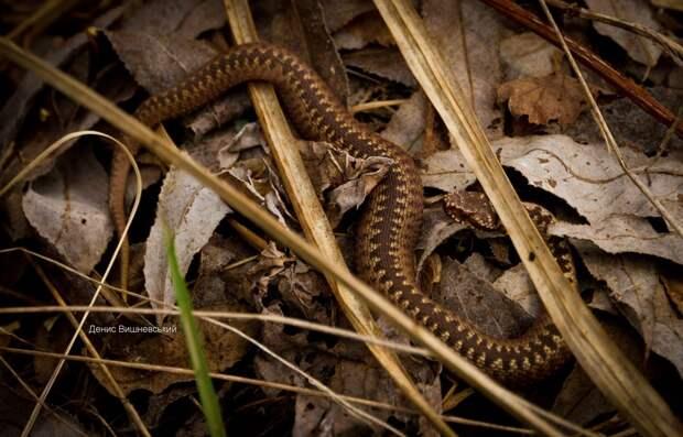 Фото змеи 2