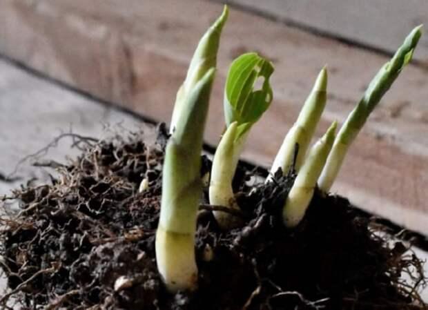 Что нужно хостам весной: 7 секретов красивой листвы