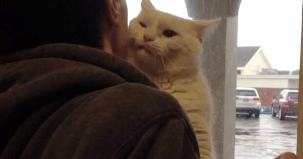 «Выбери меня!» Приютский кот запрыгнул на плечи парню, чтобы именно его забрали домой!