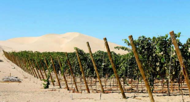 10 стран, где, оказывается, производят вкусное вино, а мы даже не знали обэтом