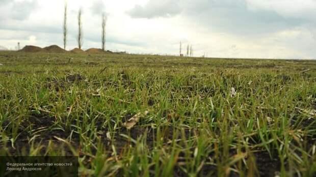 Херсонские фермеры в тупике: внезапное нашествие мышей лишило запаса рапса и зерновых