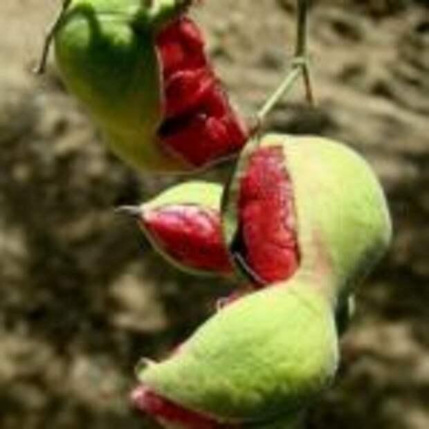 20 плодов, о которых мало кто знает