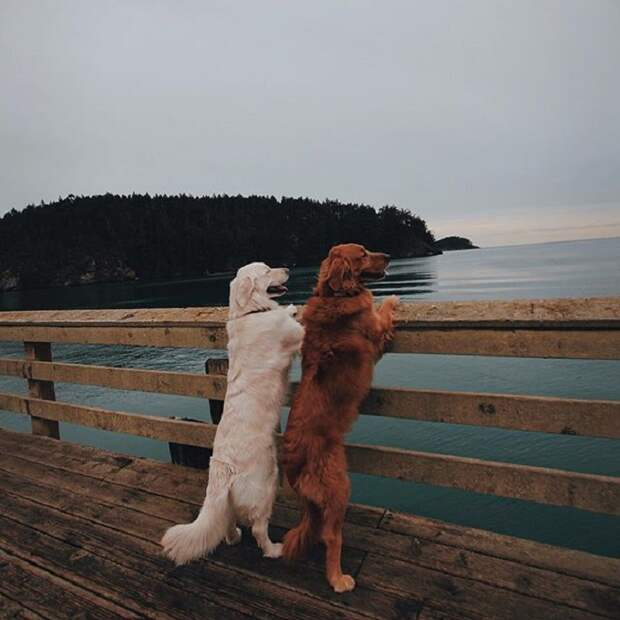Уотсон и Кико с большим удовольствием гуляют возле речки.