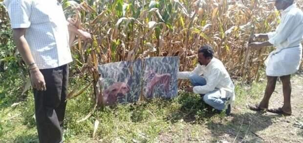 Фермер покрасил собаку, чтобы отпугивать обезьян от своего урожая
