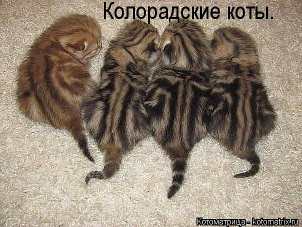 kotomatritsa_a (604x453, 218Kb)