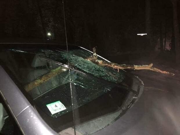В городе Литлтон, США, внезапно упавшая ветка пробила лобовое стекло автомобиля авто, в мире, дорога, за рулем, опасно, подборка, прилетело