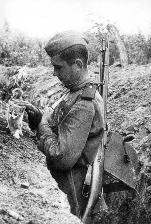 Кошки партизаныВ годы Великой Отечественной войны советский...