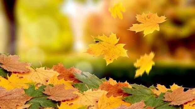 Знаки зодиака: что вам необходимо сделать этой осенью