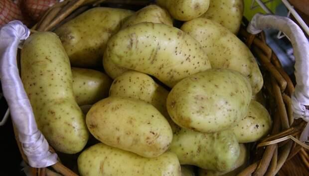 Рекордные 428 тыс т картофеля собрали в Подмосковье