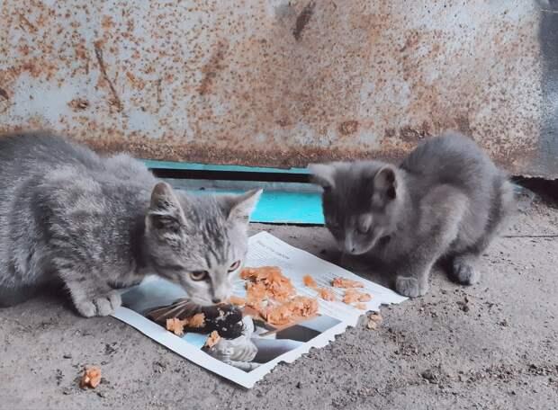 Кошки на предприятии больше пары лет не живут... Дайте им шанс выжить!!!