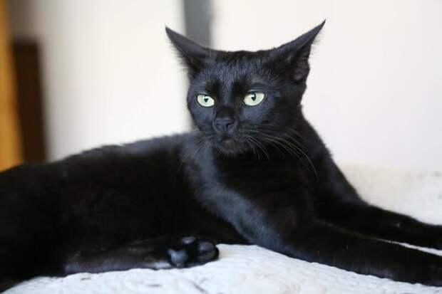 Но когда кошке исполнилось 6 месяцев, её атаковал новый недуг — тромбоцитопения домашний питомец, животные, забота, кошка, спасение