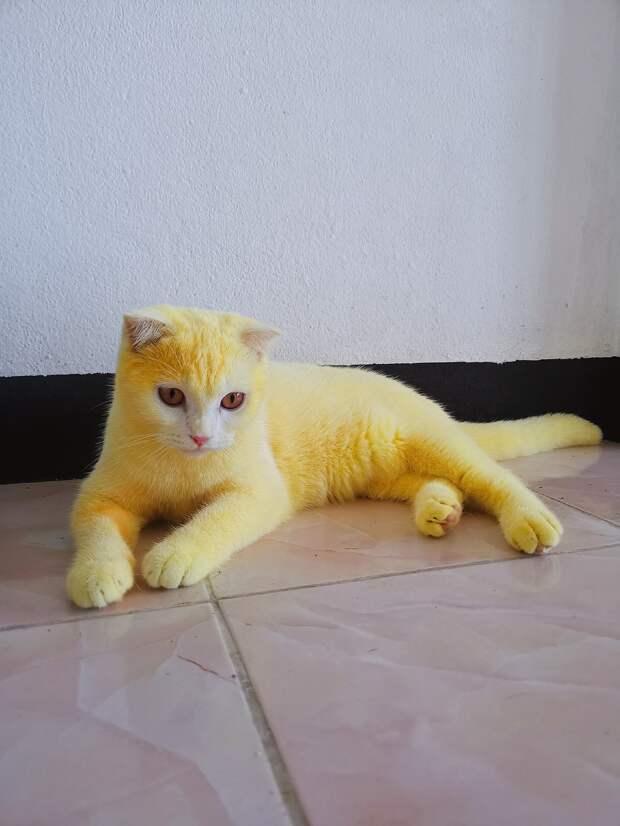 Превратила кошку в покемона, пока лечила её народным средством. Ведь куркума + белая шерсть = провал