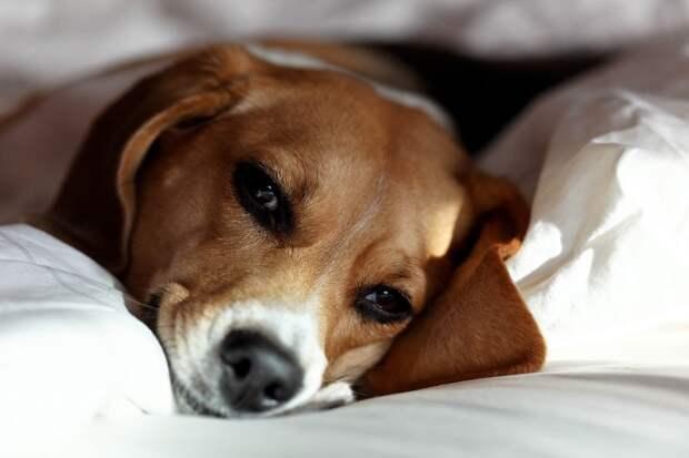 поведение собак зоопсихология
