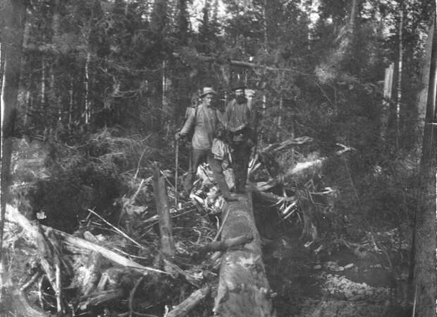Лес в окрестностях Косьвинского камня. Фото из экспедиции М.А. Павлова. 1910-е гг.