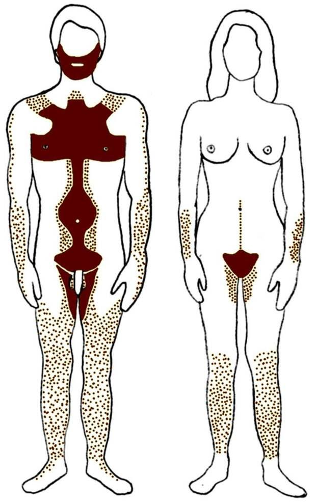 Распределение волос на теле человека