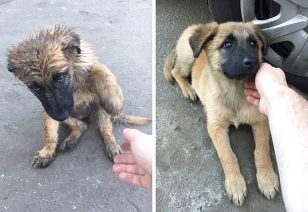 Собаки, которые умеют воровать души людей!