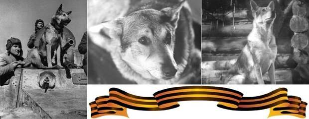 Джульбарс - пес, которого на Параде Победы несли на руках