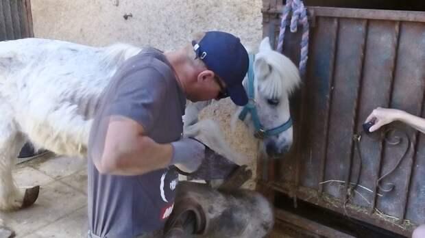 Пони с копытами, похожими на «восточные туфли», не мог стоять… Он стал жертвой моды!