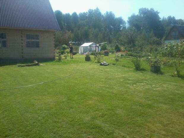 Стрижка газона в середине августа