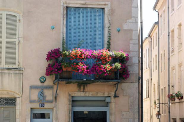 Для озеленения балкона лучше всего использовать неприхотливые многолетние вьющиеся растения.