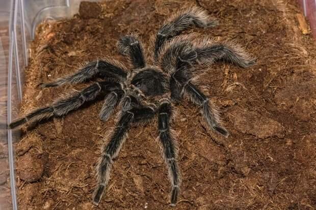 Жительницу Москвы не спасли от огромного паука