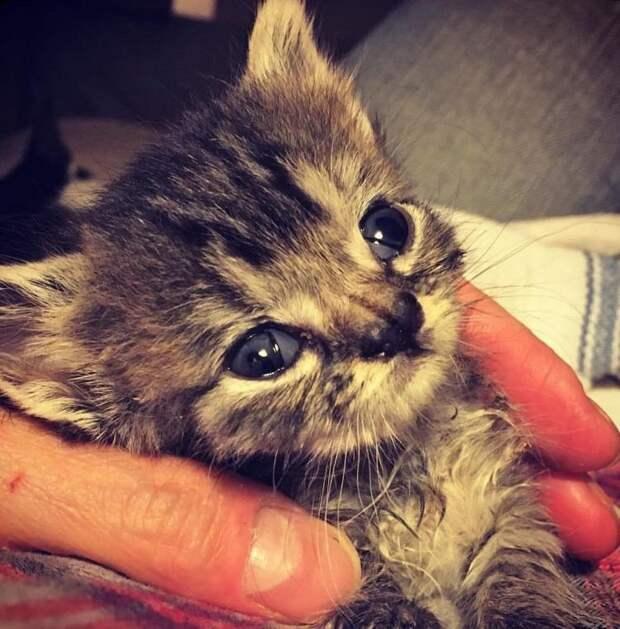 Редкое заболевание и трудное детство подарили этой кошечке запоминающуюся внешность
