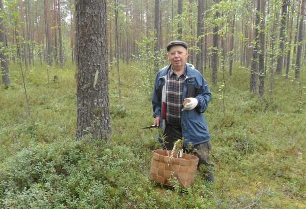 Как я в августе в лес по грибы ходил