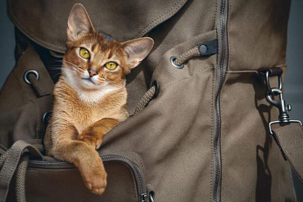 Продающего экскурсии кота нашли в Сочи